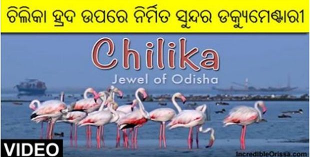 Chilika documentary
