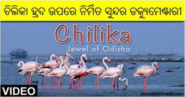 Chilika documentary