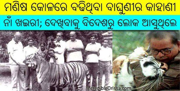 Khairi Odisha Tiger