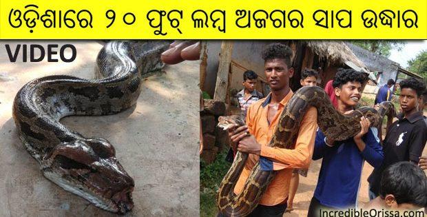 Odisha 20-ft-long python