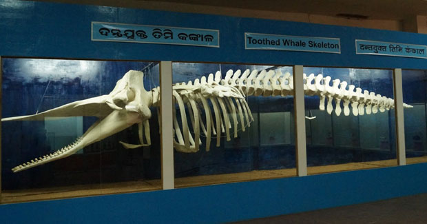 Regional Museum of Natural History in Bhubaneswar