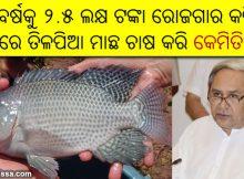 Tilapia fish farming in Odisha