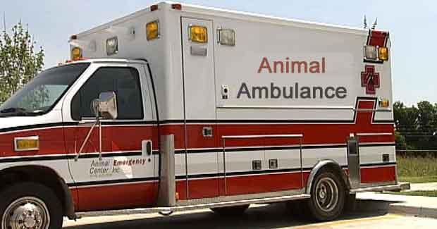 animal ambulance