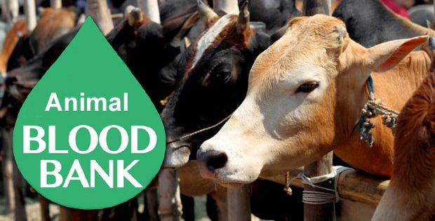 animal blood bank in odisha