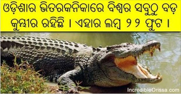 bhitarkanika crocodile