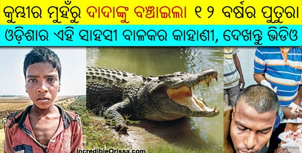 odisha boy saves uncle from crocodile