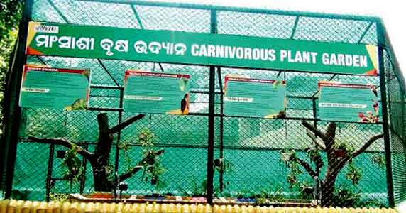 Carnivorous plant garden at Nandankanan