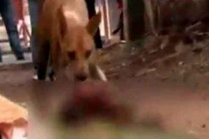 Dog eats newborn child in Odisha