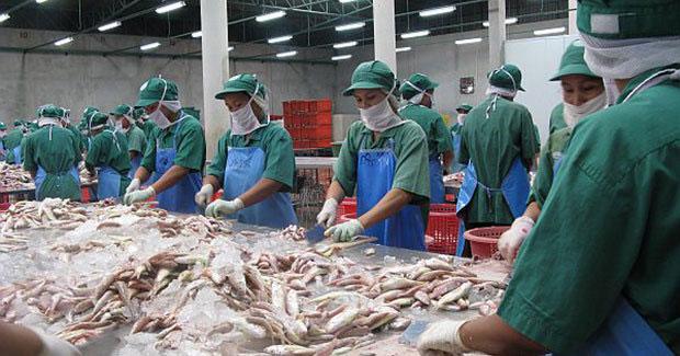 fish processing unit