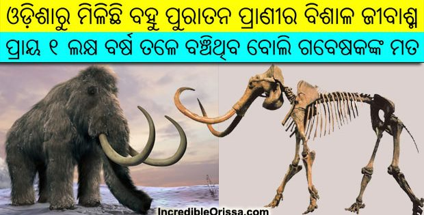 Fossil of mammoth in Odisha