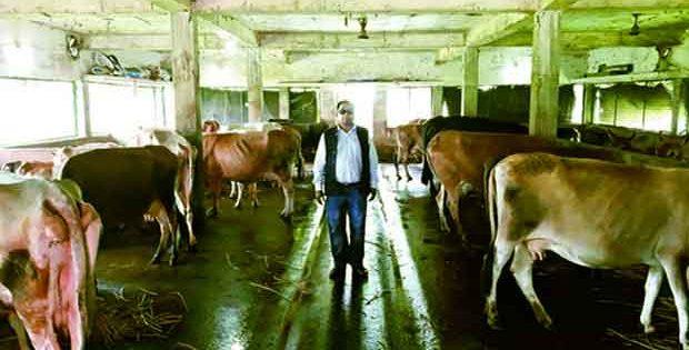 IIT alumni's dairy farm in village