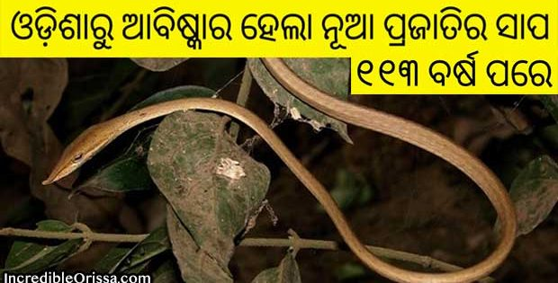 new vine snake species odisha