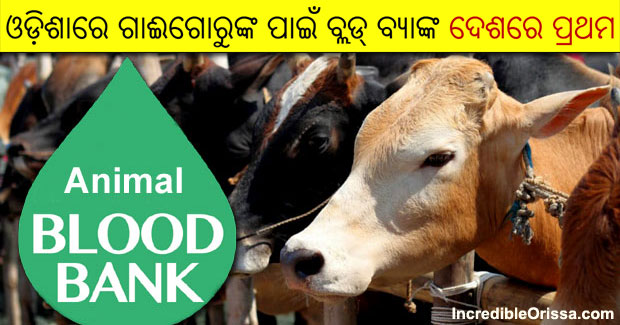 Odisha blood bank for cattle