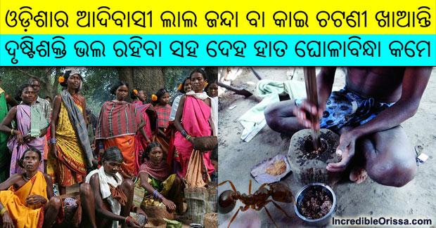 odisha tribals eat red ants