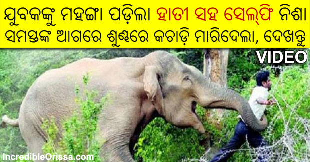 selfie with elephant odisha man death